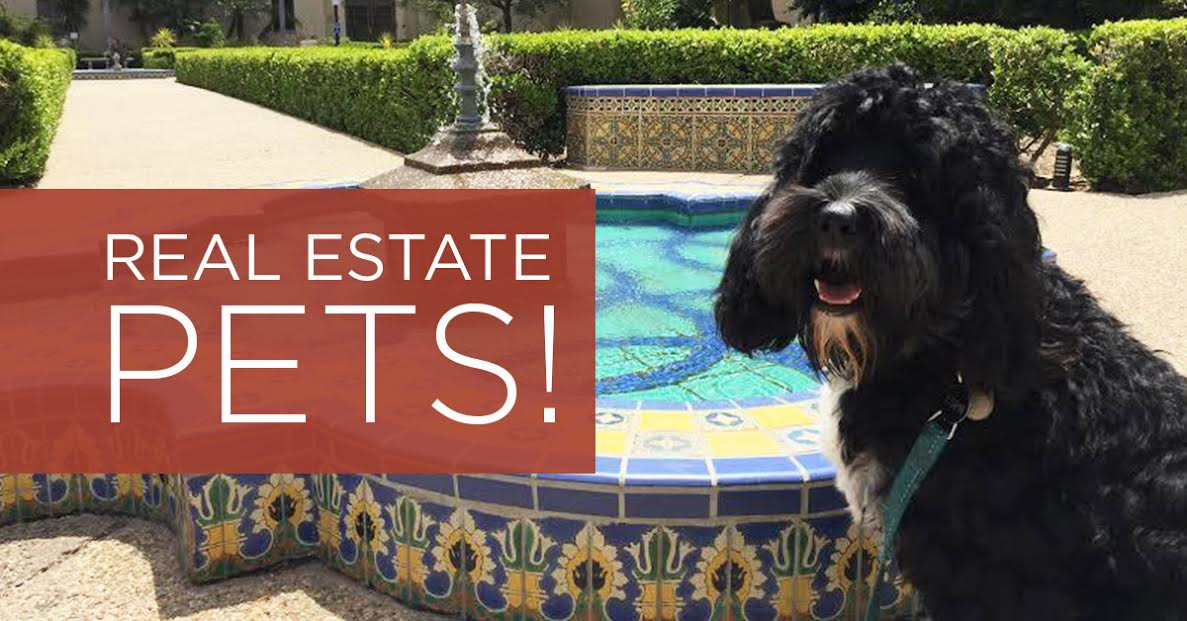 Pets Real Estate The Perfect Combo